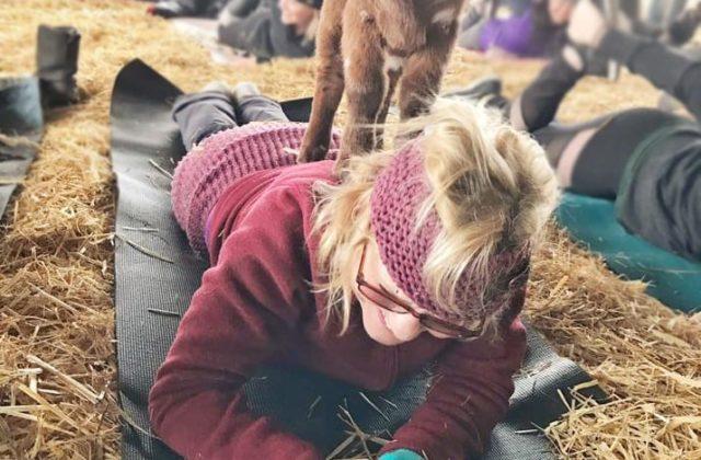 Goats Climbing Yoga