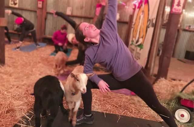 Goats Love Yoga