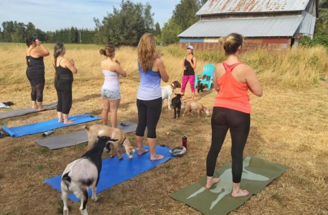 Goat Yoga Birthday Celebration