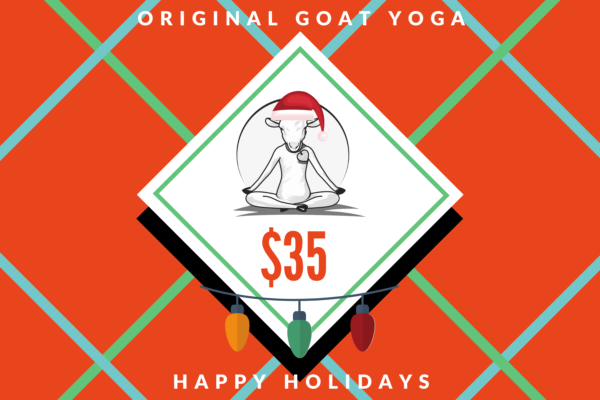 Original Goat Yoga Holiday Cards