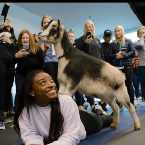 Simone Biles doing goat yoga