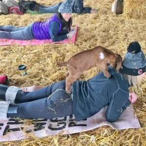 Original Goat Yoga