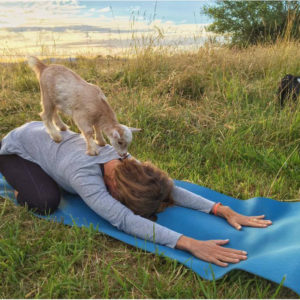 The first goat yoga class
