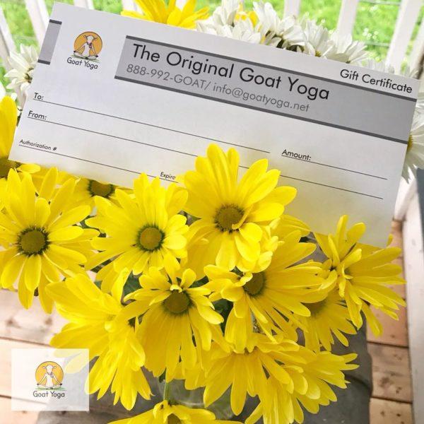 Goat Yoga Gift Certificates