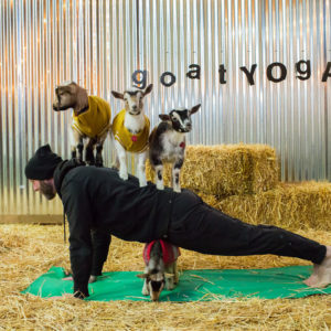 Goat Yoga in Entrepreneur Magazine