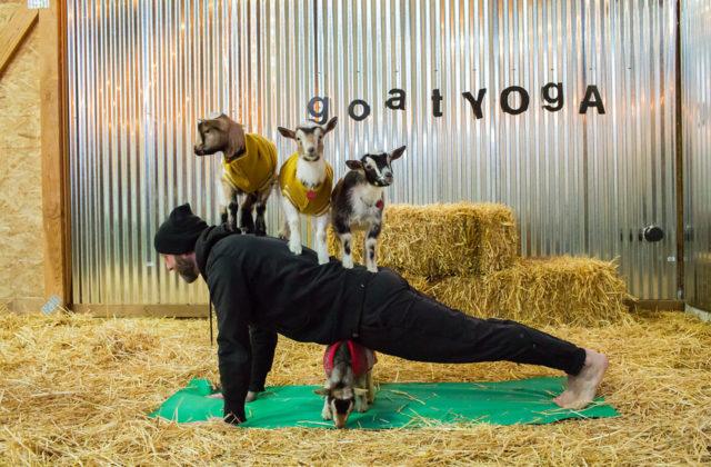 Goat Yoga in Entrepreneur Magazine