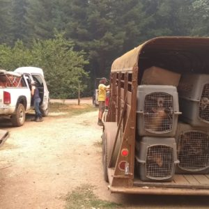 goats rescued from wildfire